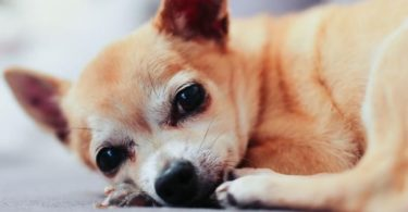 What are the best dogs for senior citizens?